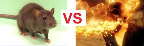 rat vs rider