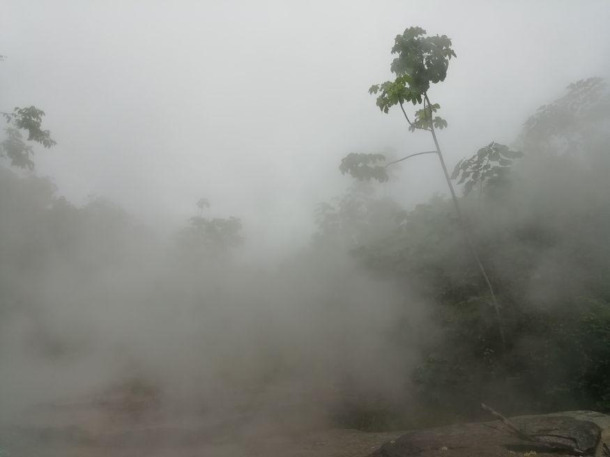 Тропический лес в тумане