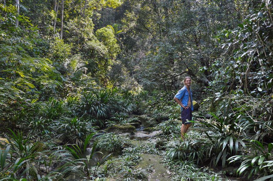 Дорога в тропическом лесу Амазонки