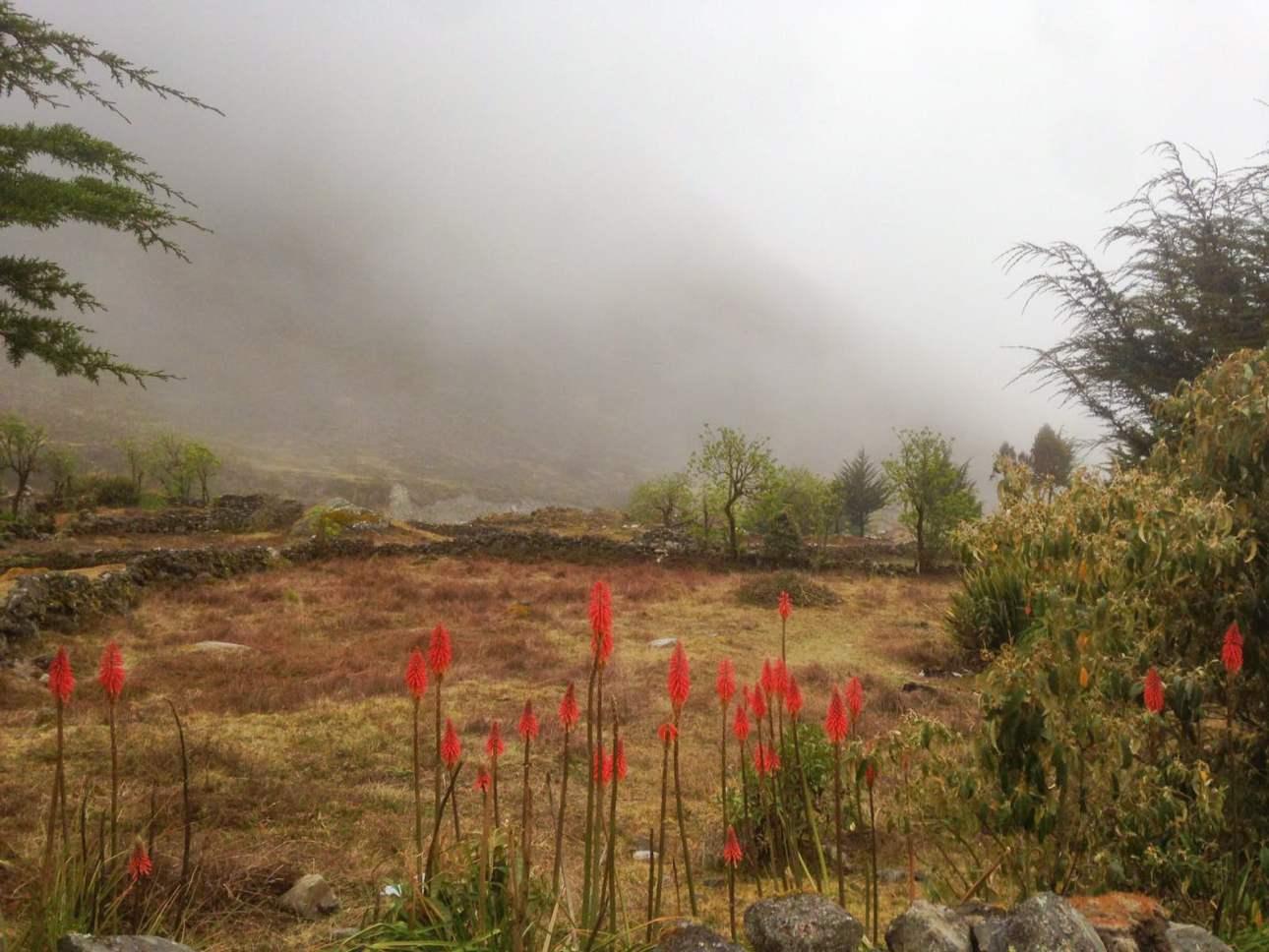 Красные цветы на оне туманных гор