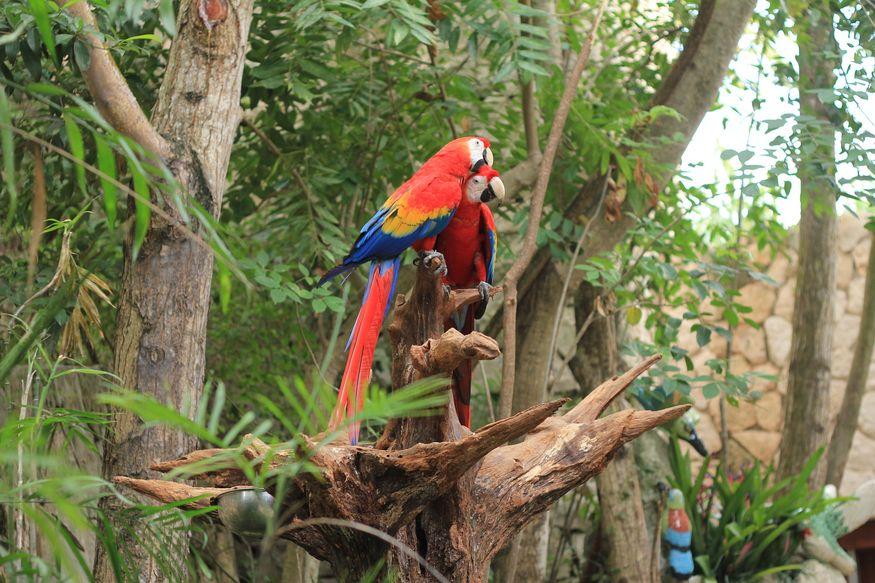 попугаи ара на ветке в джунглях