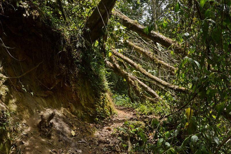 Покрытое мхом дерево