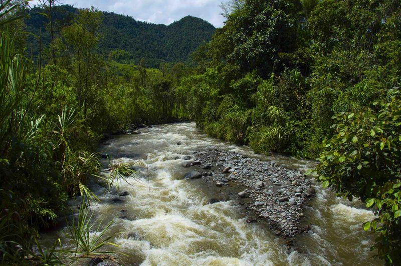 Миндо Эквадор