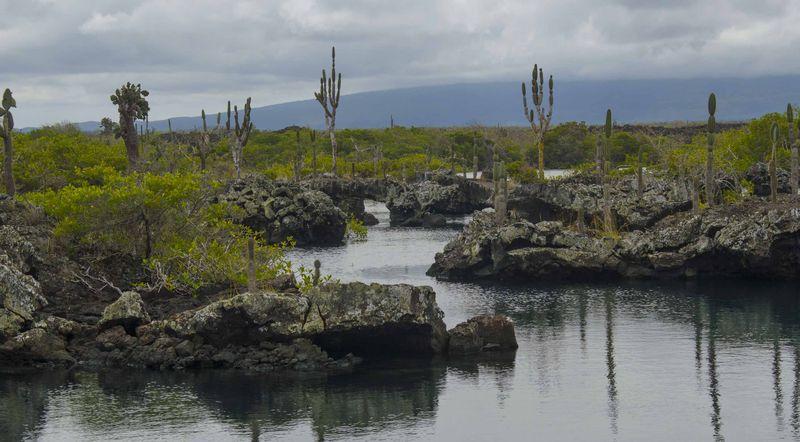 Природа островов Тихого Океана