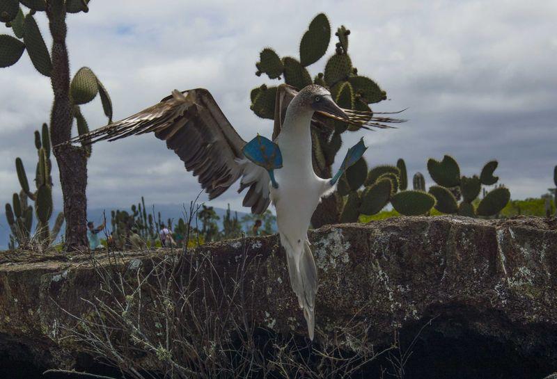Галапагосские острова - животные