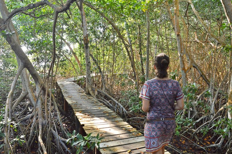 Погулка по мангровому лесу