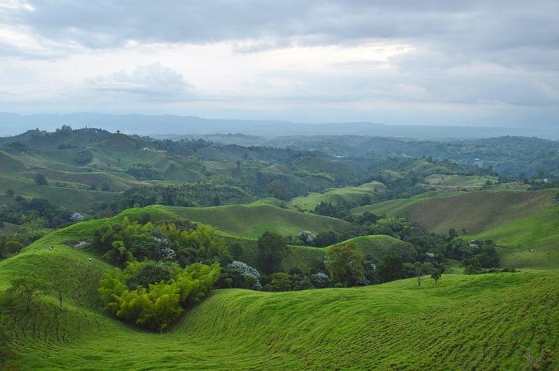 Колумбийский кофе выращивают в Перейре