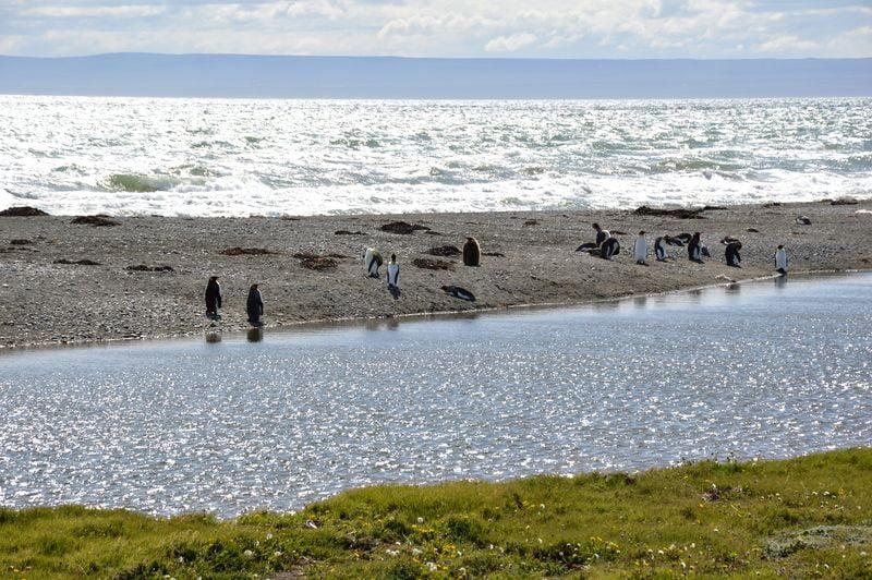 Колония пингвинов на берегу Бахии Инутил