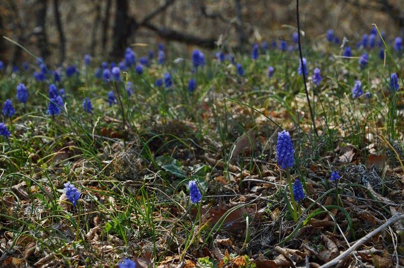 цветы грузия