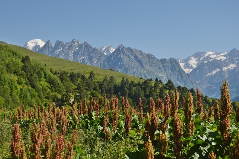 гора Бжедух (слева)