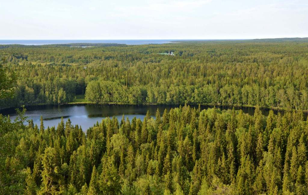 Пейзаж - река и лес