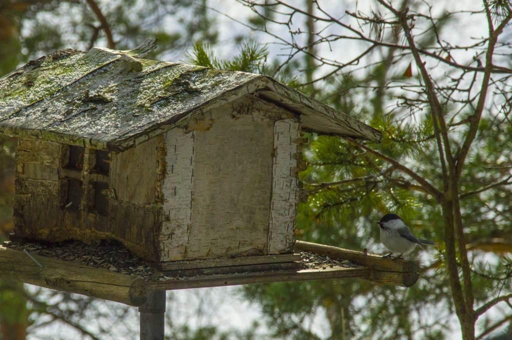 Маленькая птичка у кормушки зимой