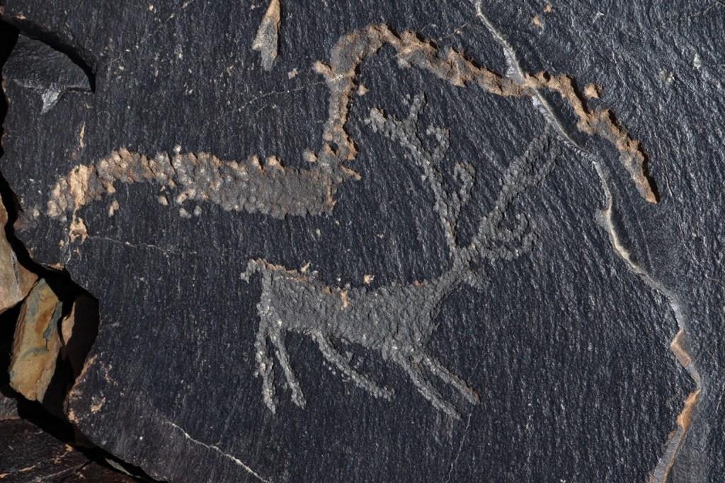 Олень с длинными рогами — рисунок