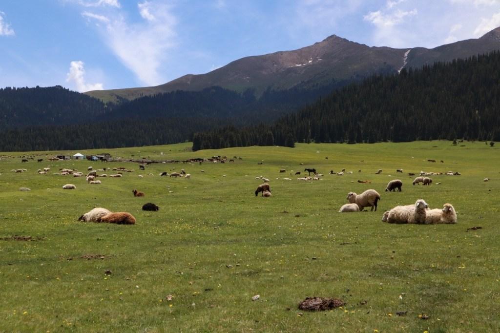Отара овец — Григорьевское и Семеновское ущелья