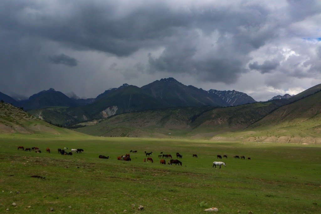 Табун лошадей на фоне грозовых туч