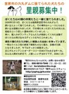 Wakamiya_suteinu