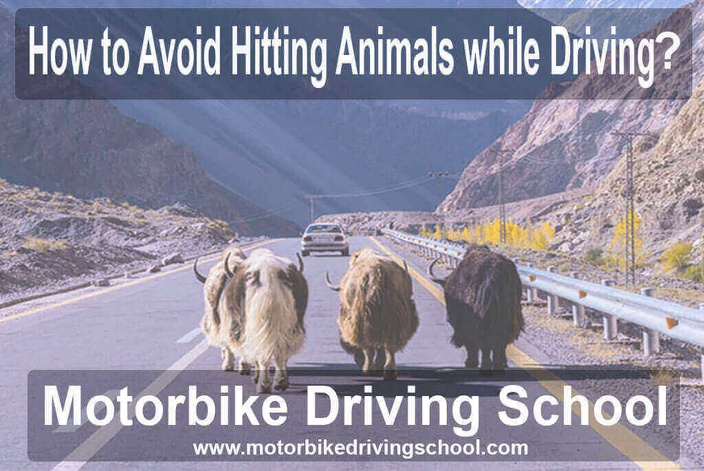 how to avoid hitting animals while driving