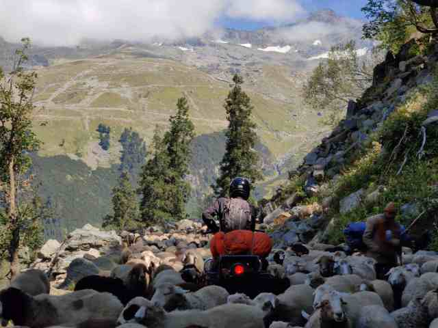 bike n rohtang pass witch is stuck out maney sheep over there