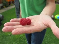 Raspberryes