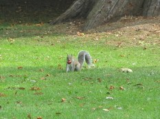 Cyril the squirrel