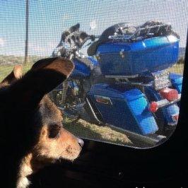 Yoska Admires Blue