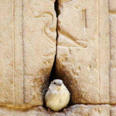 Niğde Gümüşler Manastırı - Kuş