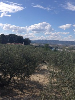 Olive grove, El Palomar