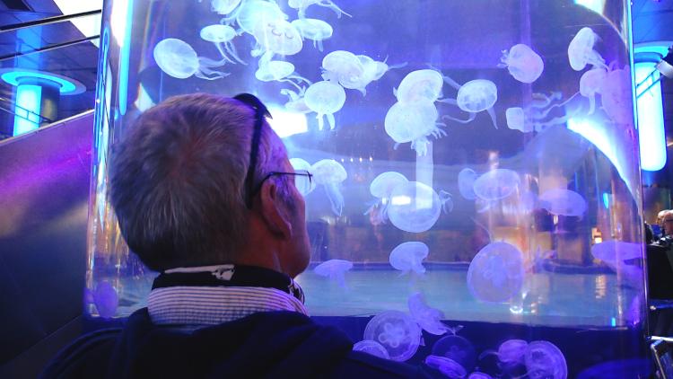 Man looking at tank full of illuminated jellyfish