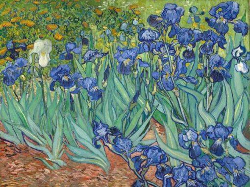Bild von Iris Schwertlilien von Vincent van Gogh
