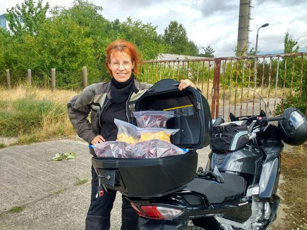 Motorradspass in Brandenburg hat man auch bei der Mirabellenernte in Brandenburg mit einer rothaarigen Motorradfahrerin und einer Yamaha FJR 1300