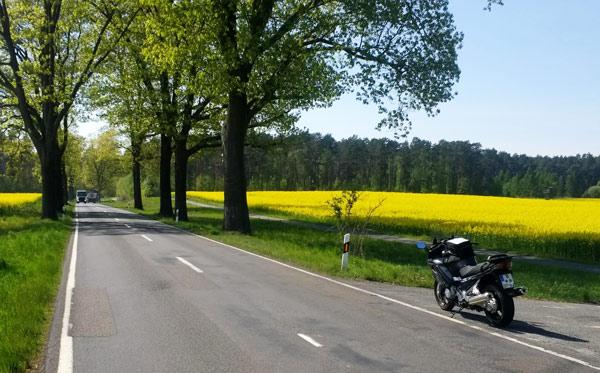 Tourentipps für den Motorradurlaub 2020: motorrad auf der deutschen alleenstrasse mit einem gelben rapsfeld im hintergrund