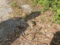 Schildkröte gerettet