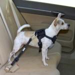 peiteira-coleira-peitoral-01 Cachorro No Carro: Como Transportar Seu Cão?