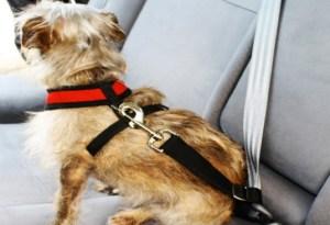 Cachorro no Carro - Peiteira Coleira Peitoral