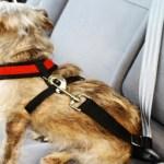 peiteira-coleira-peitoral-03 Cachorro No Carro: Como Transportar Seu Cão?