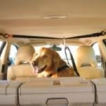 peiteira-coleira-peitoral-05 Cachorro No Carro: Como Transportar Seu Cão?
