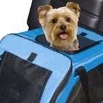 Transporte de cachorro no carro