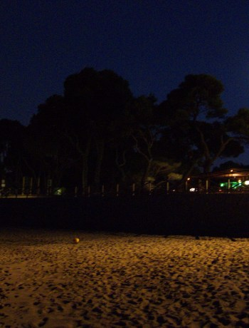 Night time, moon shining, silhouettes of trees, beach sand in foreground, no people