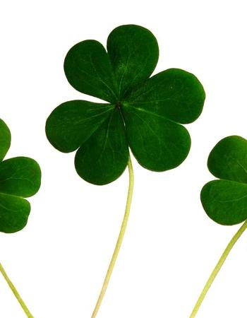 Shamrocks, by Anthony on Pexels.com (CC License)