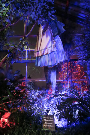 Giant Alice at Calgary Zoolights | Jill Browne