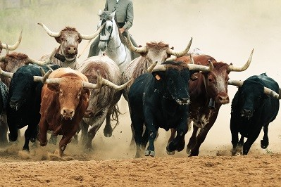 The Stock Markets 2020 Bull Run Has Just Started