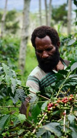 Salah satu petani kopi di Pyramid Wamena