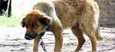 Chiquito-el perro preso de Argentina