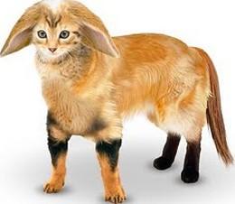 mascota-ideal