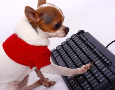 chihuahua escribiendo