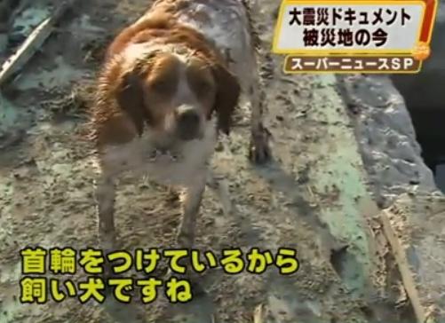 animales en el terremoto y tsunami en Japón