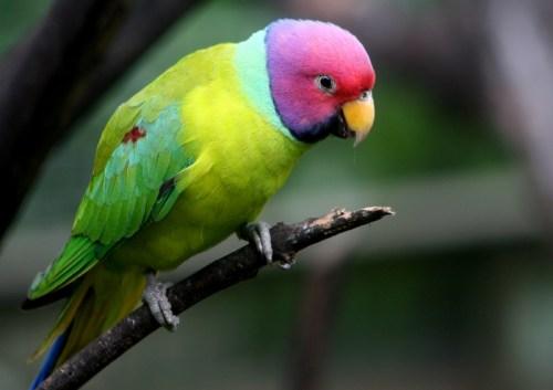 Las aves nacieron para ser libres, no para estar enjauladas.