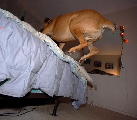 Brincando en tu cama