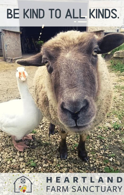 Heartland Farm Sanctuary Round Up 2020 Mounds Pet Food Warehouse