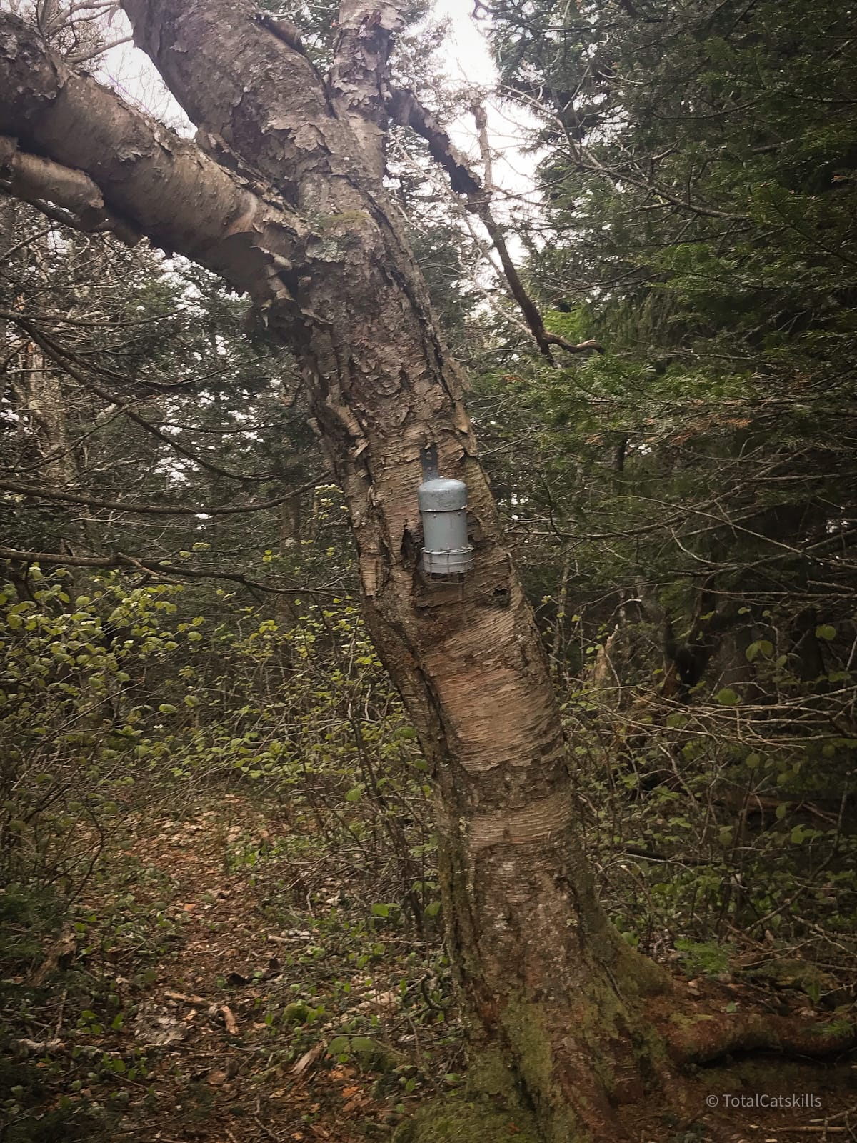 canister affixed to tree